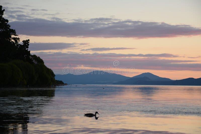 Jeziorny Taupo obraz royalty free