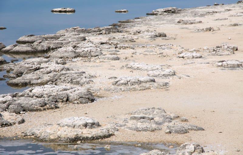Jeziorny Thetis: Wysuszony - out obraz stock