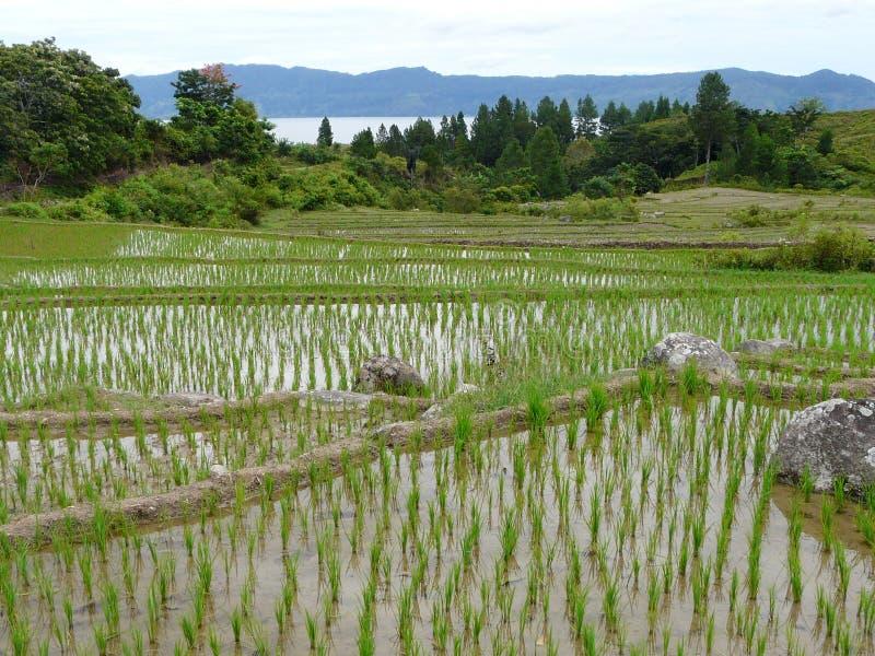 Jeziorny Toba Indonezja zdjęcia stock