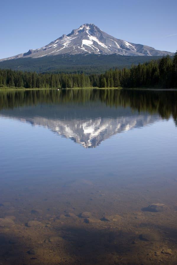 jeziorny trillium zdjęcie stock