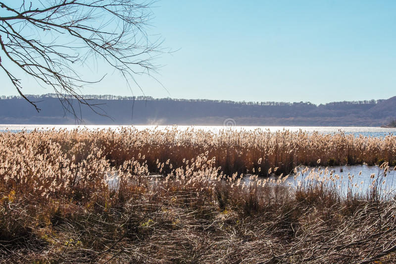 Jeziorny Vico naturalny reseve zdjęcia royalty free
