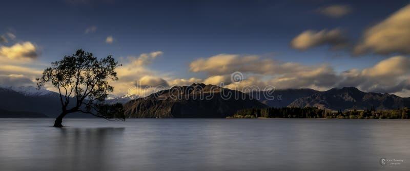Jeziorny Wanaka drzewo obrazy royalty free