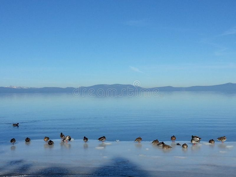 Jeziorny widok przy Jeziornym Tahoe zdjęcia stock
