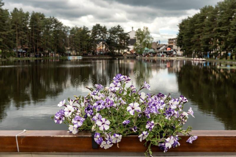 Jeziorny widok w Zlatibor, Serbia obraz stock