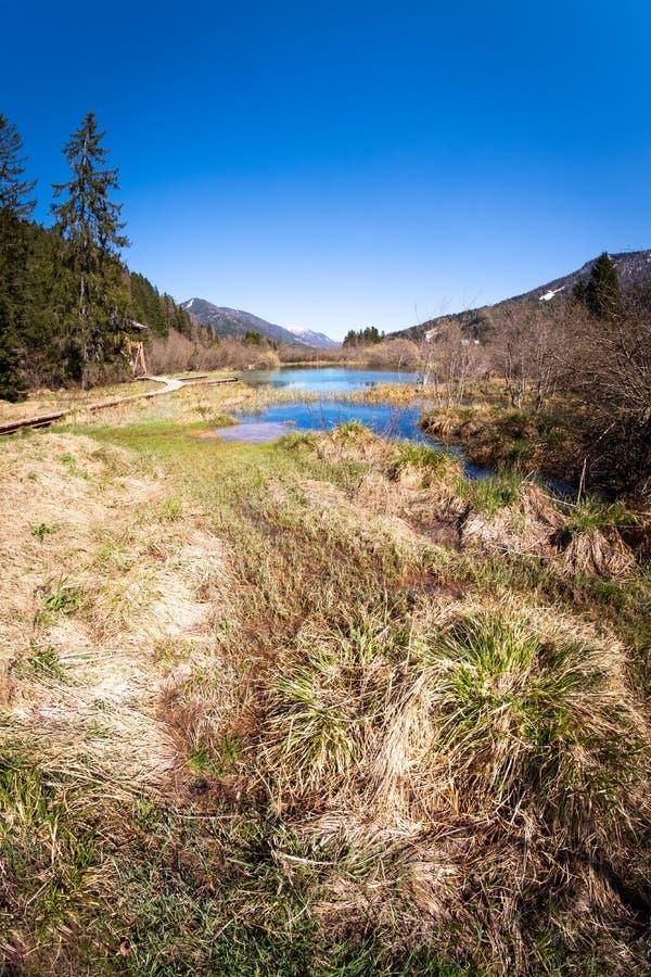 Jeziorny Zelenci, źródło Sava Dolinka rzeka w Slovenia, zdjęcia royalty free