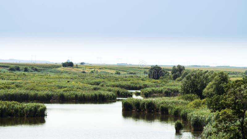 Jezioro i łąka zdjęcie royalty free