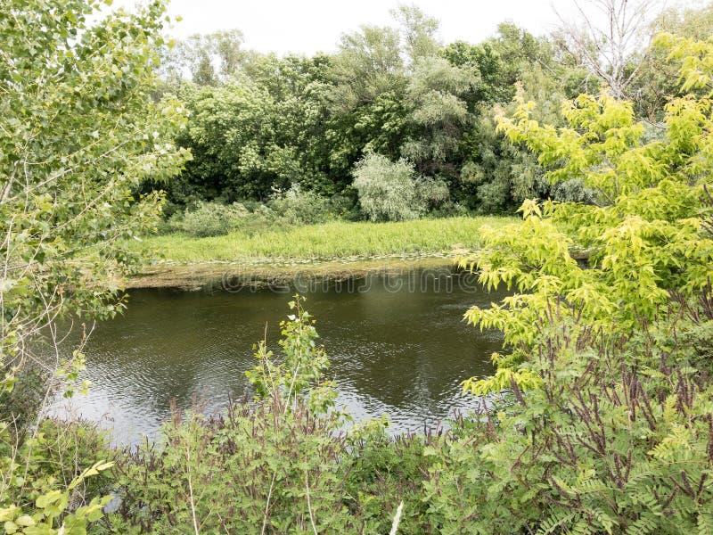 Jezioro i drzewo krajobrazy fotografia stock