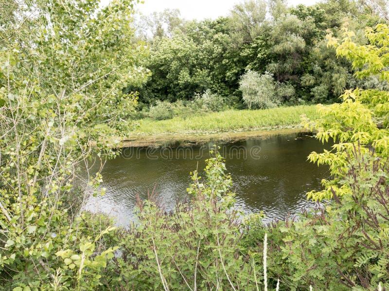 Jezioro i drzewo krajobrazy fotografia royalty free