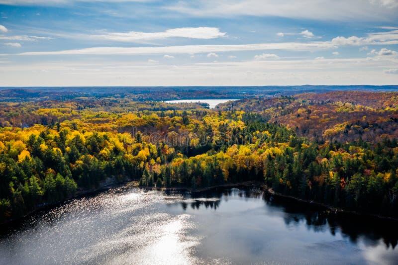 Jezioro i las w jesieni obraz stock