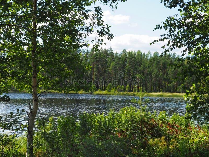 Jezioro i las zdjęcia stock