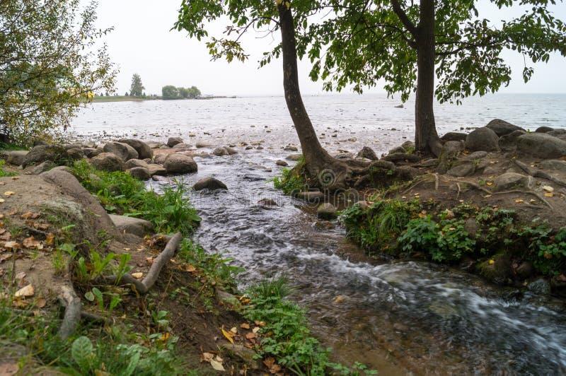 Jezioro i rzeka w lesie obrazy stock