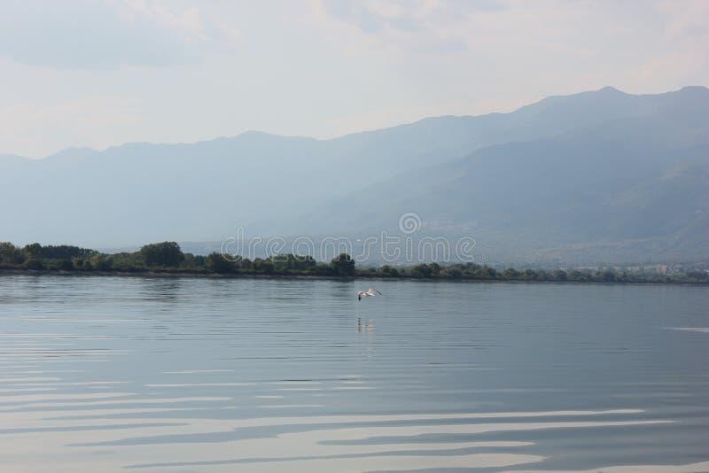 Jezioro Kerkini Serres Grecja fotografia royalty free