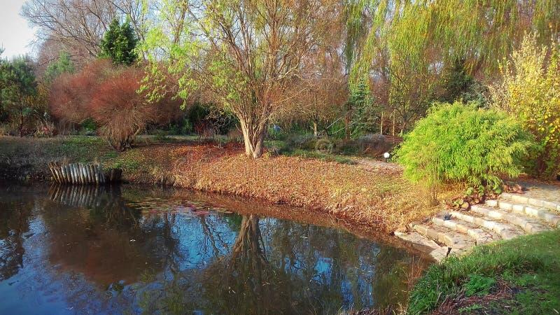 Jezioro na ogrodowej fabule otaczającej drzewami i krzakami zdjęcie royalty free