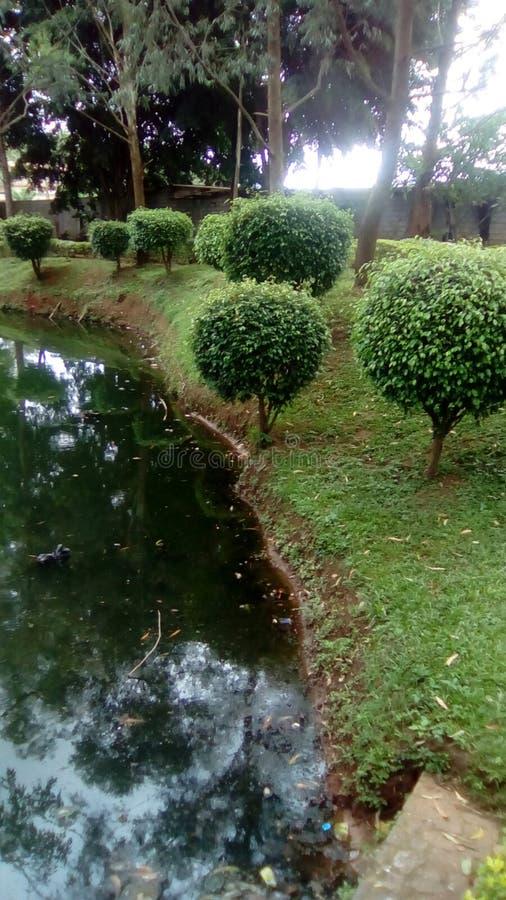 Jezioro, ogród, drzewa i trawa pod słońcem, obrazy royalty free