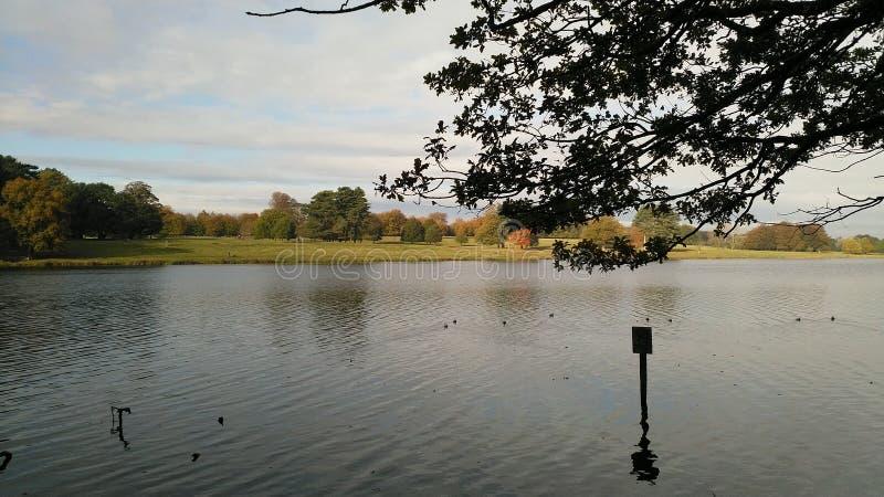 Jezioro otaczaj?cy drzewami fotografia stock