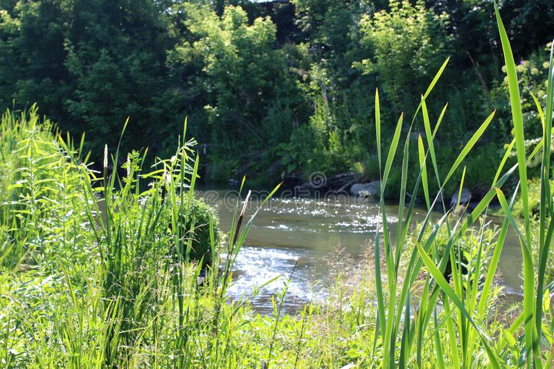 Jezioro przerasta z wysoką trawą na bankach malowniczy widok obrazy stock