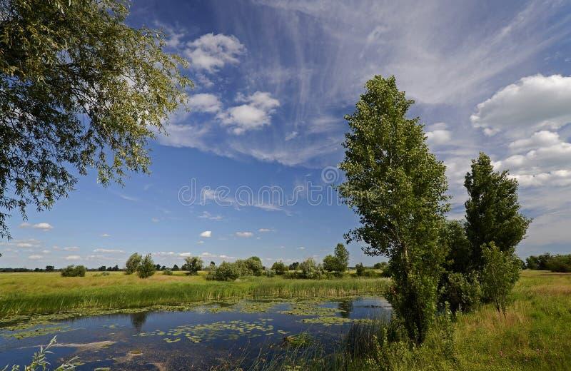 Jezioro przy lato łąką obrazy stock