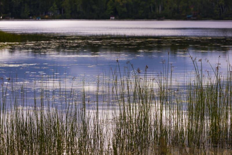 Jezioro rośliny na brzeg Pająk jezioro obrazy stock