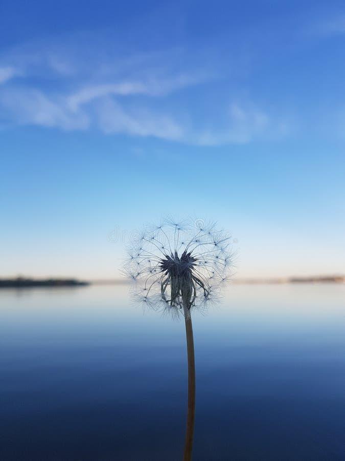 Jezioro strzał obraz royalty free