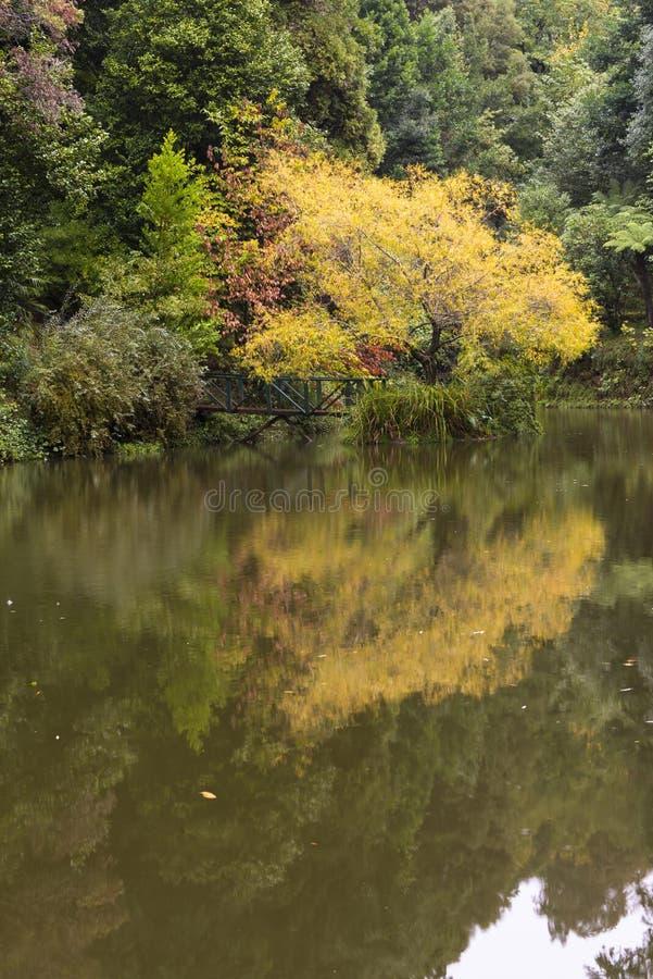 Jezioro w Bussaco Portugalia fotografia royalty free