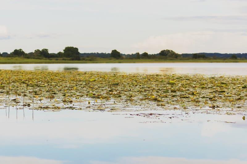 Jezioro w Latvia zdjęcie royalty free