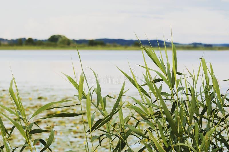 Jezioro w Latvia fotografia royalty free