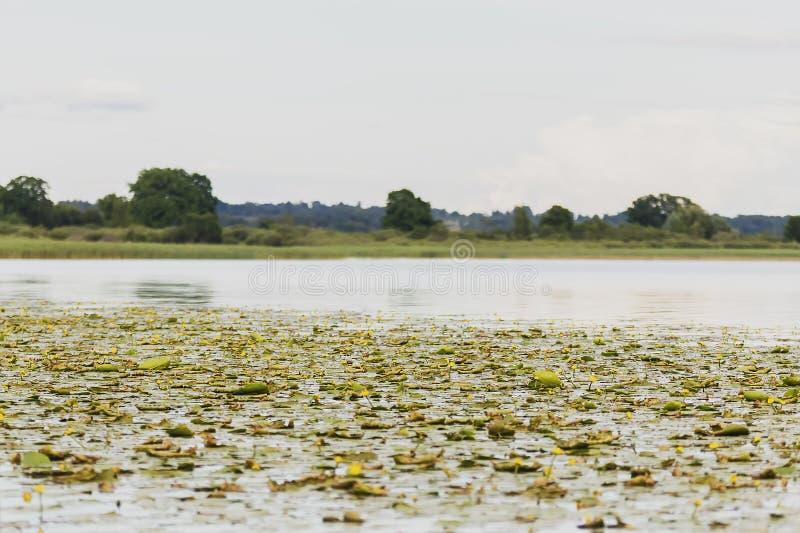 Jezioro w Latvia obraz stock