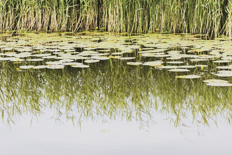 Jezioro w Latvia zdjęcie stock