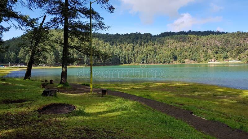 Jezioro w lesie 4 fotografia royalty free
