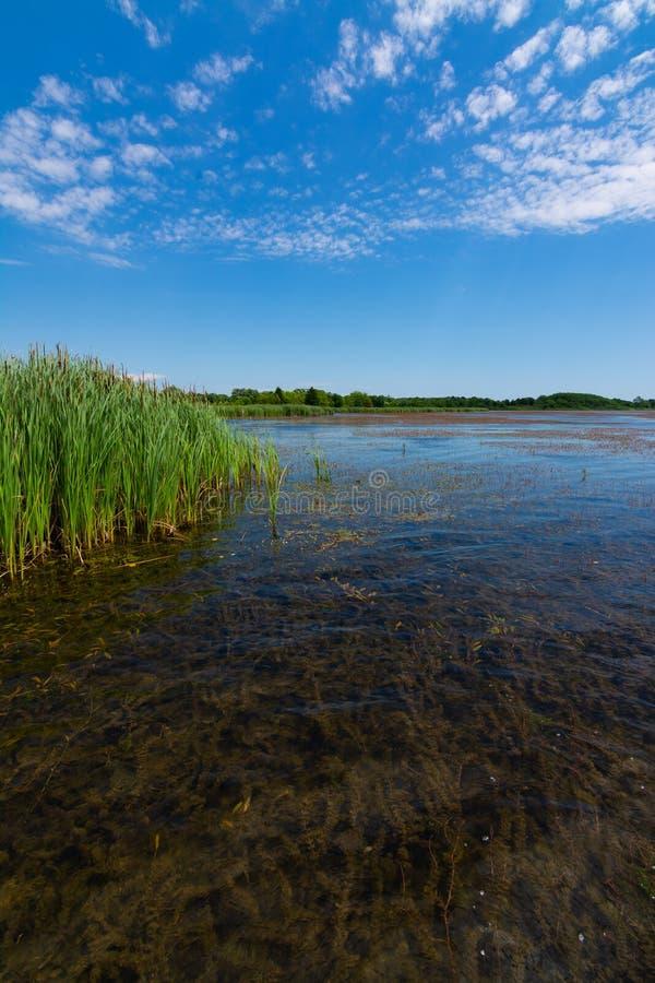 Jezioro w Richard Bong stanu Rekreacyjnego teren obrazy stock