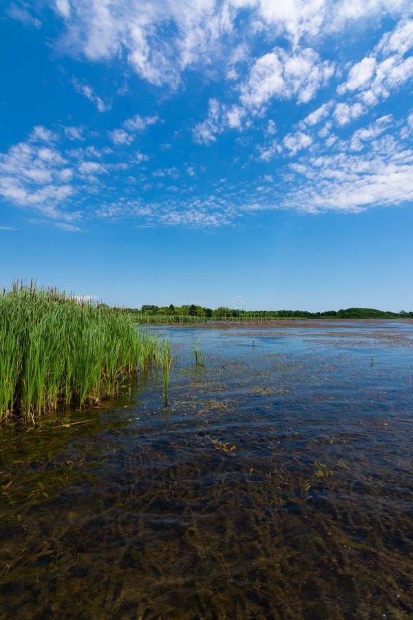 Jezioro w Richard Bong stanu Rekreacyjnego teren obraz royalty free