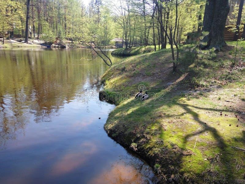 Jezioro w zielonym lesie fotografia royalty free