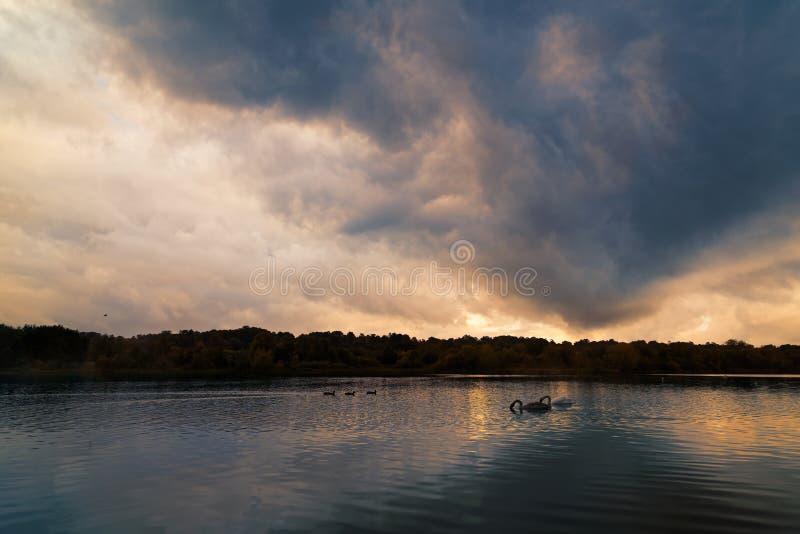 Jezioro Z Dramatycznymi chmurami, Macierzystym łabędź I łabędziątkiem, zdjęcia stock