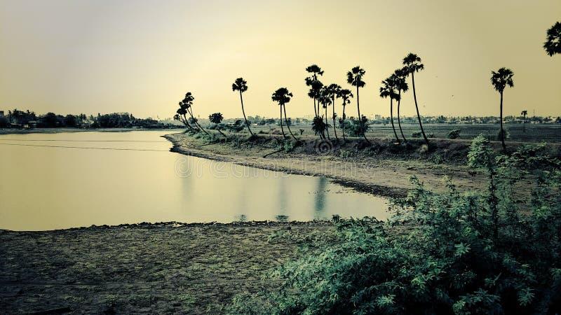Jezioro z drzewami fotografia royalty free
