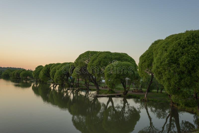 Jezioro z drzewami w wieczór zmierzchu zdjęcia stock