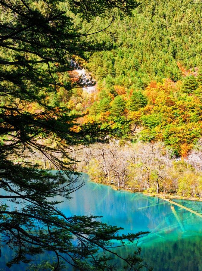 Jezioro z lazurowym kryształem jasna woda i zanurzający drzewni bagażniki - obrazy stock