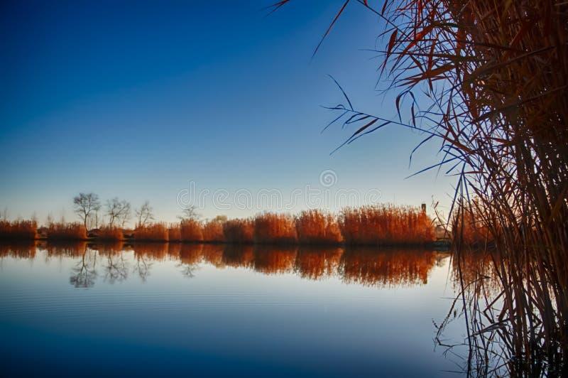 Jezioro z płochą zdjęcia stock