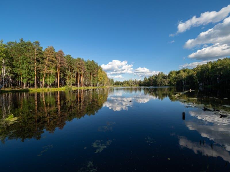 Jezioro z sosny i brzozy lasem na brzeg zdjęcie royalty free