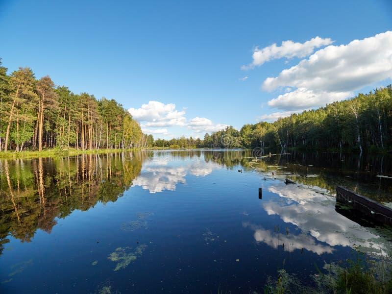Jezioro z sosny i brzozy lasem na brzeg zdjęcie stock