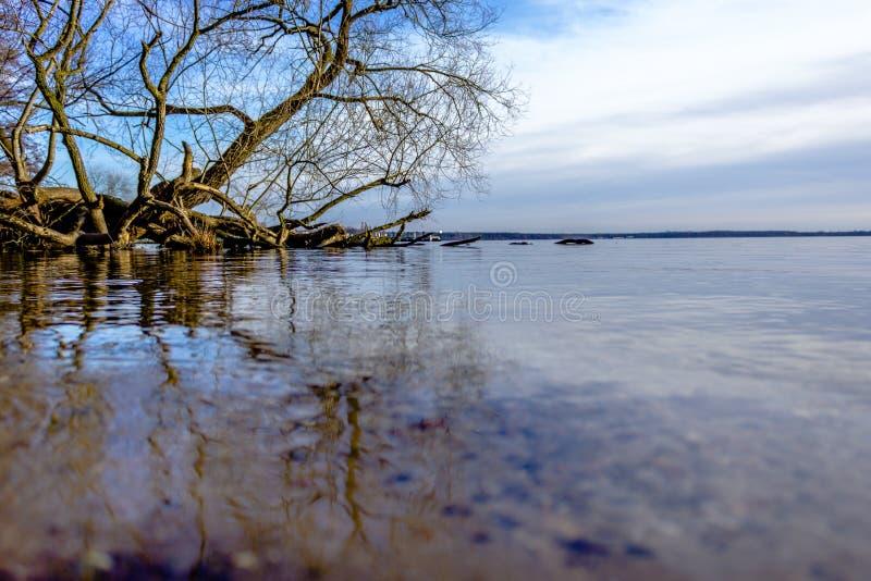 Jezioro z suchym drzewem i przejrzystą wodą fotografia royalty free