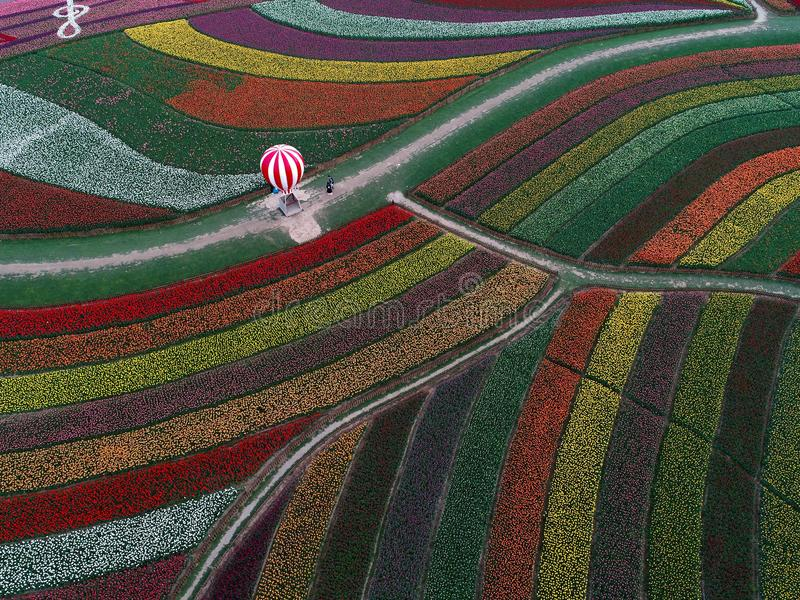 Jiangsu yancheng: the aerial photography of 30 million tulips in the Netherlands is intoxicating. Aerial view of more than 30 million tulips in full blossom at royalty free stock photos