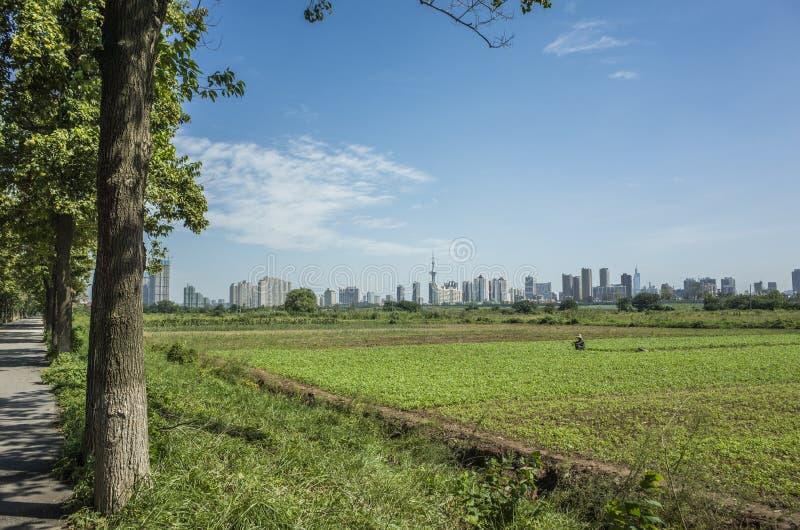 Jiangxinzhou royalty free stock image