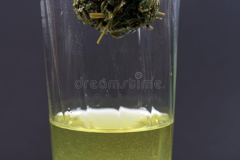 Jiaogulan ziele także często odnosić sie jako ziele nieśmiertelność obraz royalty free