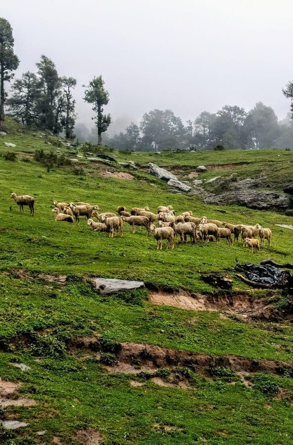 Jibhi谷喜马偕尔邦印度 库存图片