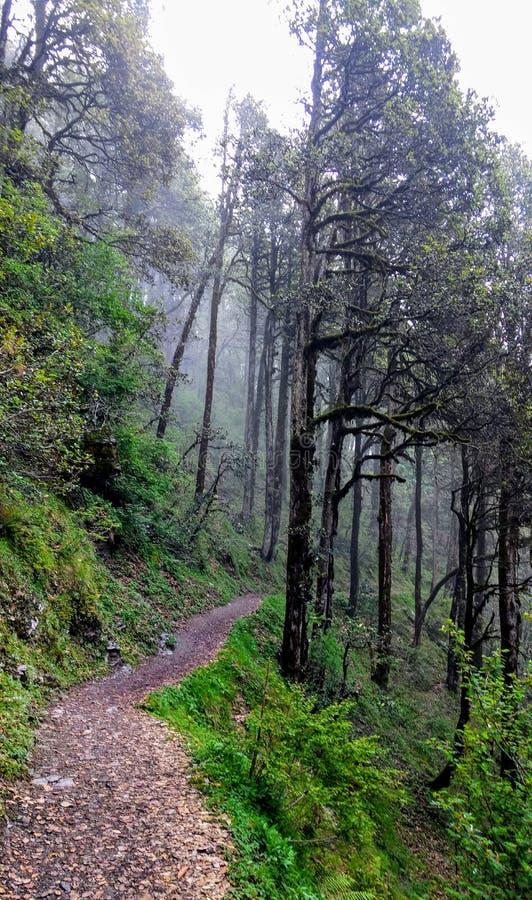 Jibhi谷喜马偕尔邦印度 图库摄影