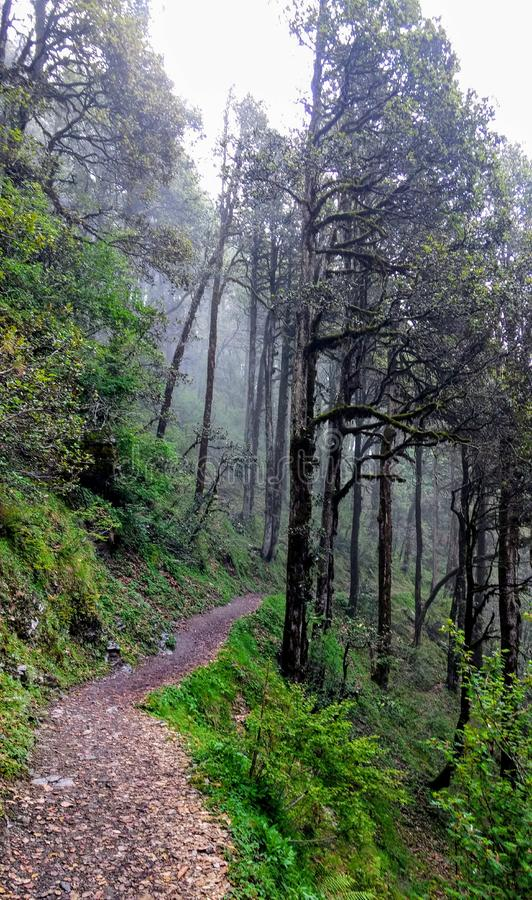 Jibhi pradesh dolinni himachal ind fotografia stock