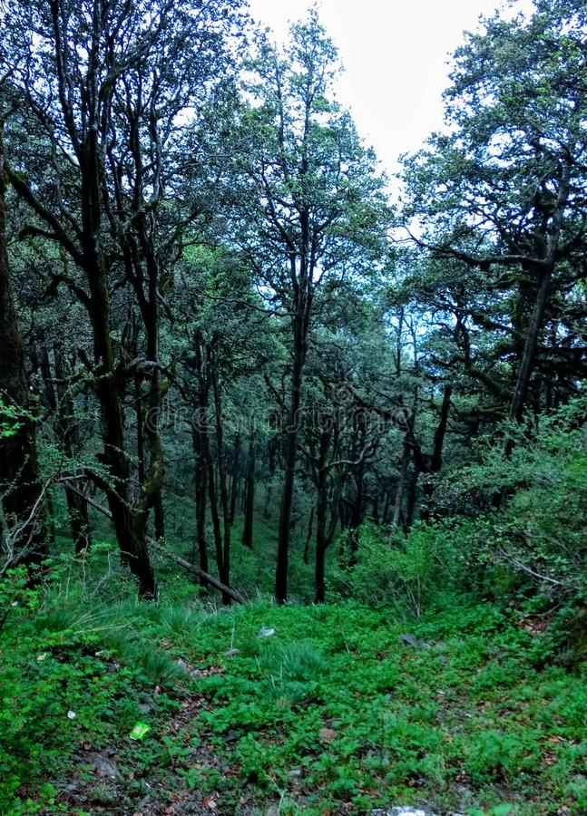 Jibhi pradesh dolinni himachal ind obrazy stock