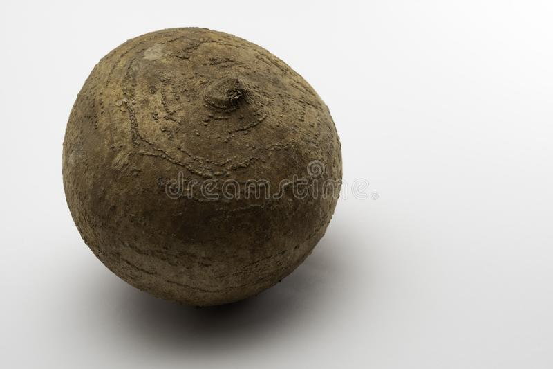 Jicama, Meksykańska ignam fasola lub rzepa na biurku, zdjęcia stock