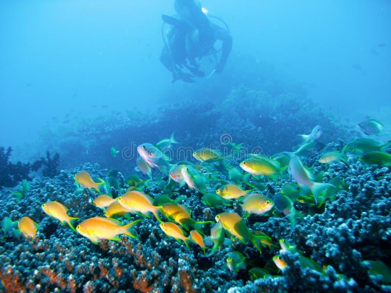 jim tropikalny akwalung przygody zdjęcie stock