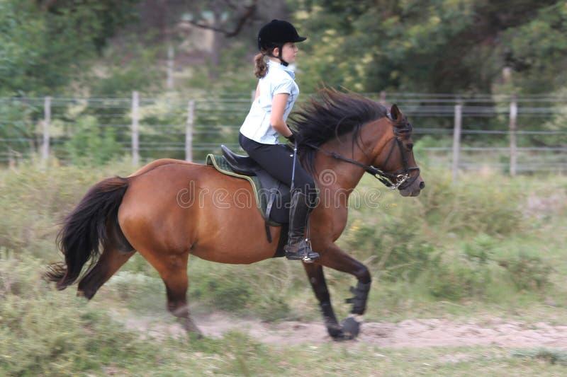 Jinete adolescente del caballo fotografía de archivo libre de regalías